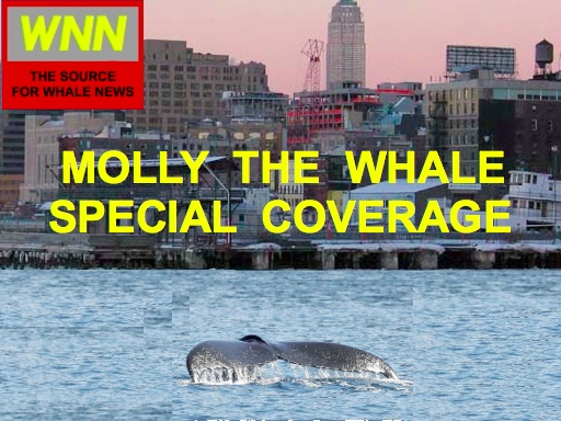 WNN - Your Source For Whale News